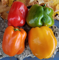 Stoplight Bell Mix Peppers