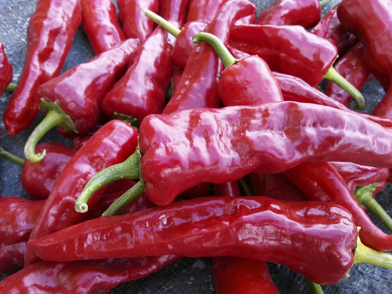 'Canoncito' New Mexico Landrace Chilies (Peppers)