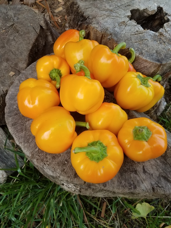 Golden Apple (Peppers)