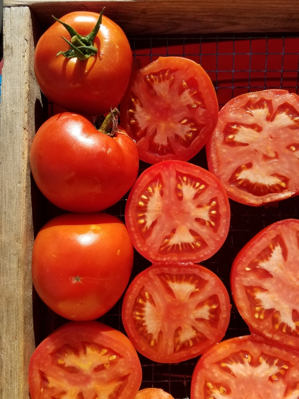 Homestead (Tomato)