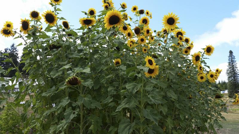 Wild Garden Seed: Orga...