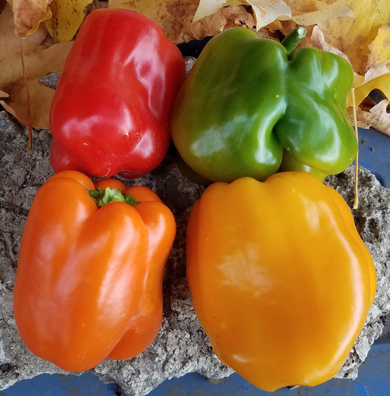 Stoplight Bell Mix (Peppers)