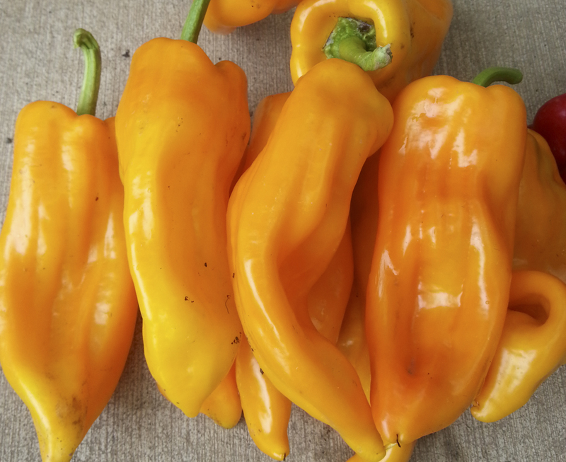 Yella Bella (Peppers)