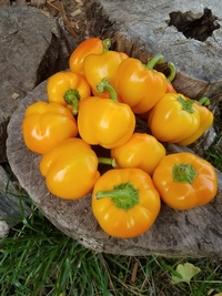Golden Apple Peppers