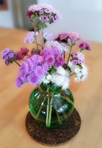 Timeless Mix Ageratum/Floss Flower